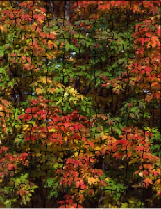 Fall Foliage Custom Jigsaw Puzzle