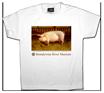 custom t-shirt dye sublimation