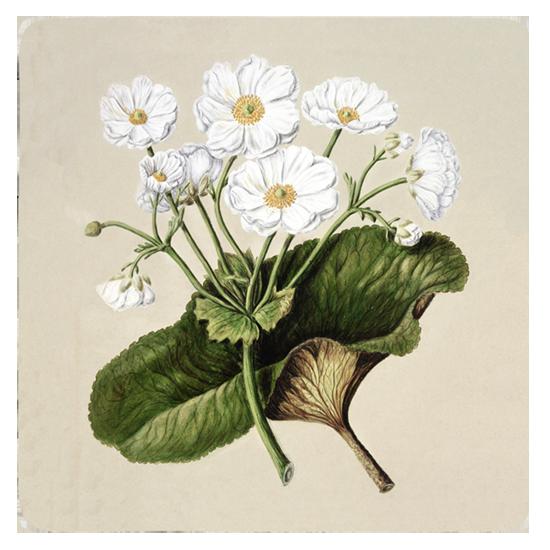 Custom Printed Coaster - Floral